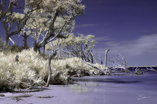 Driftwood Beach on Jekyll Island in Super Color IR