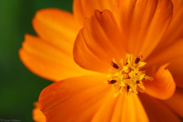 Orange Flower Macro Oct 2015