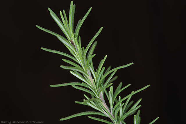RoundFlash Rosemary Macro Shot