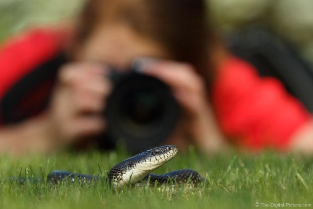 Brittany behind Black Snake