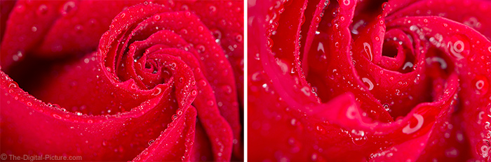 Macro Rose at 1.0x Magnification and Magnified by Extension Tubes and 1.4x Teleconverter