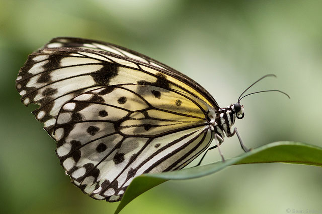Visit a Conservatory to Quickly Bolster your Butterfly Imagery