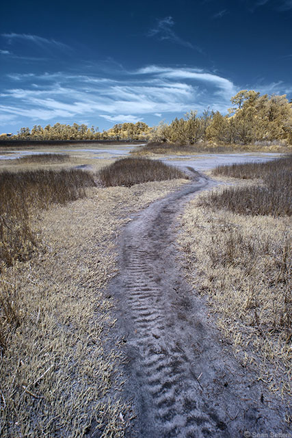 Using a Pathway as a Compositional Element: Whitemarsh Island in Infrared