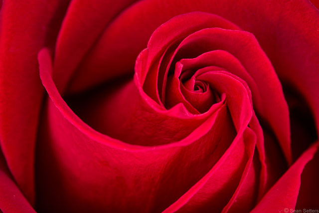 Use Your Camera to Get the Most Out of Your Valentine's Day Bouquet