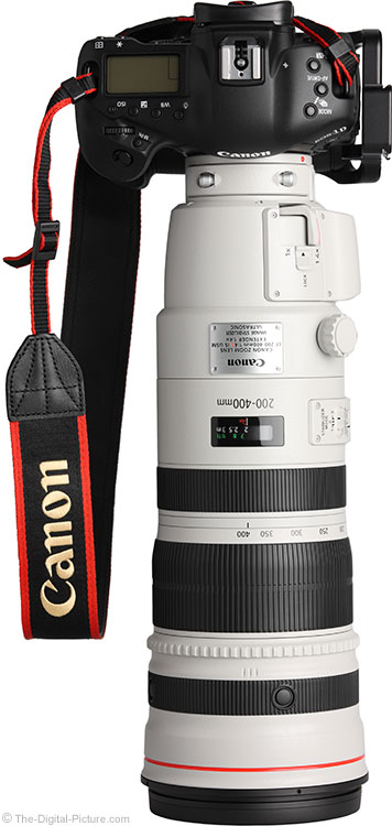 Canon EF 200-400mm f/4 L IS USM Ext 1.4x Lens on EOS 1D X