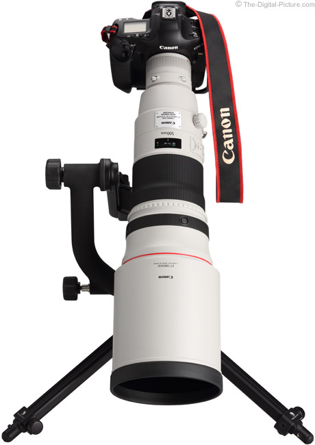 Canon EF 500mm f/4 L IS II USM Lens on Canon EOS 1Ds Mark III DSLR Camera