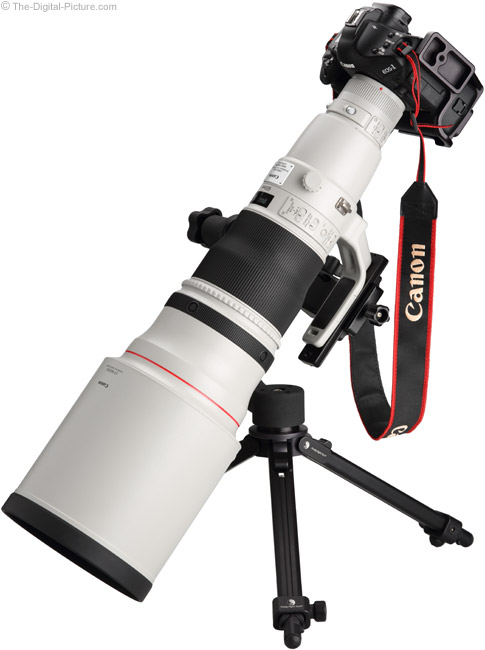 600mm Angle View on Canon EOS-1Ds Mark III DSLR Camera