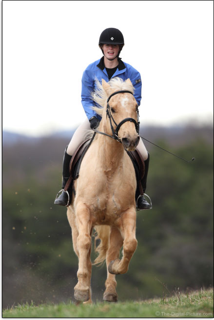 Canon EOS 80D imagem do cavalo