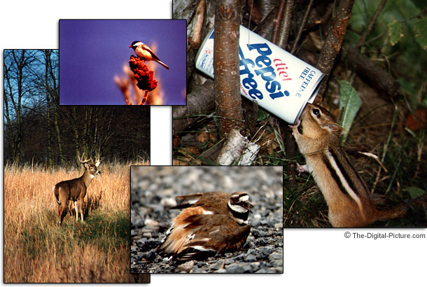 Bryan Carnathan's Early Wildlife Photos