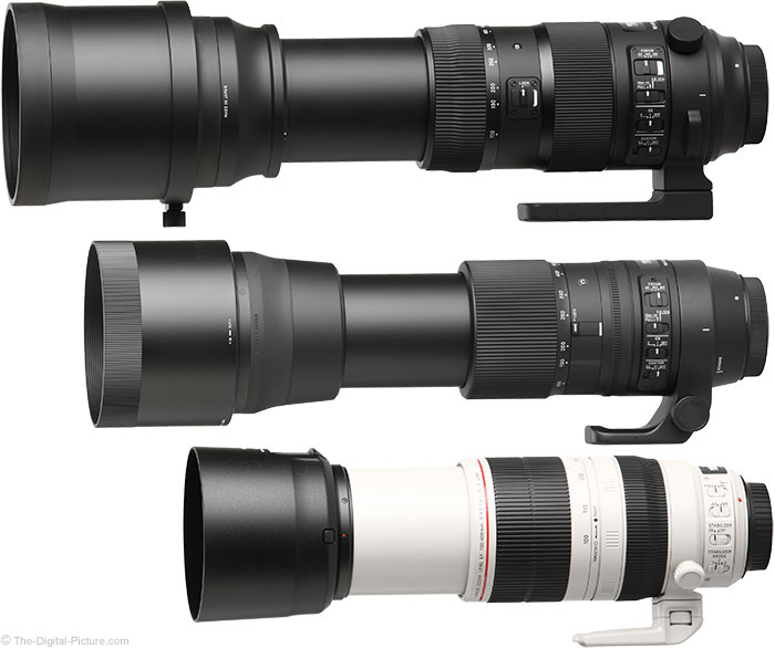 Sigma 150-600mm Sports and Contemporary Lenses Compared to Canon