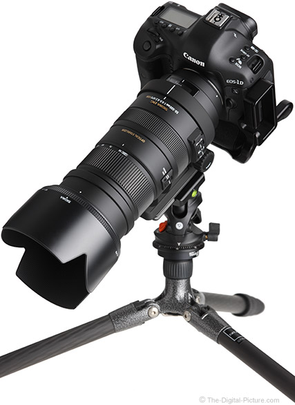 Sigma 50-500mm f/4.5-6.3 DG OS HSM Lens with Hood