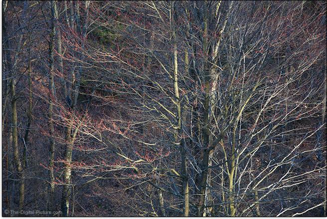 Tamron 70-200mm f/2.8 Di VC USD G2 Lens Landscape Sample Picture