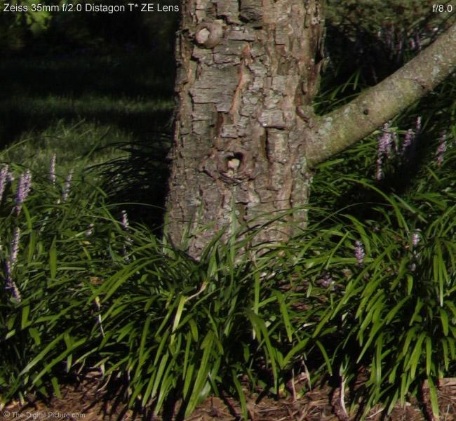 Zeiss 35mm f/2.0 Distagon T* ZE Lens Image Quality Comparison