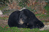 PA Black Bear Picture