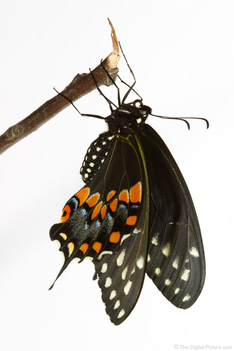 Butterfly Drying Wings Picture