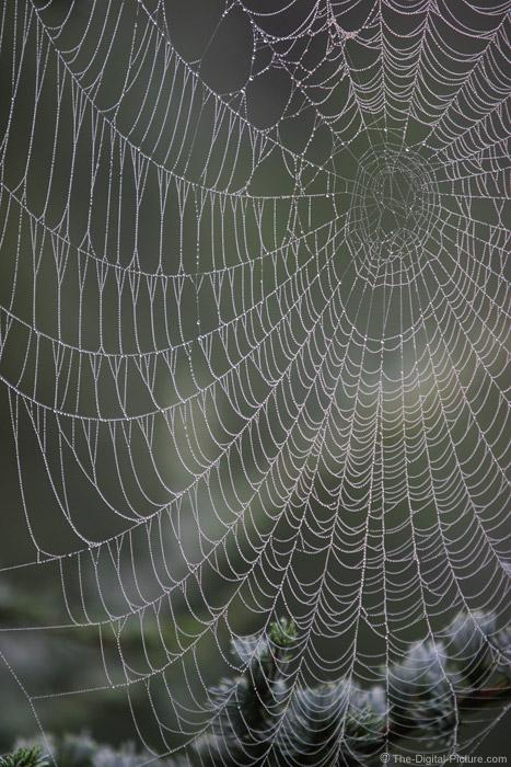 Spider Web Picture