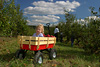 Little Girl in Red Wagon Picture