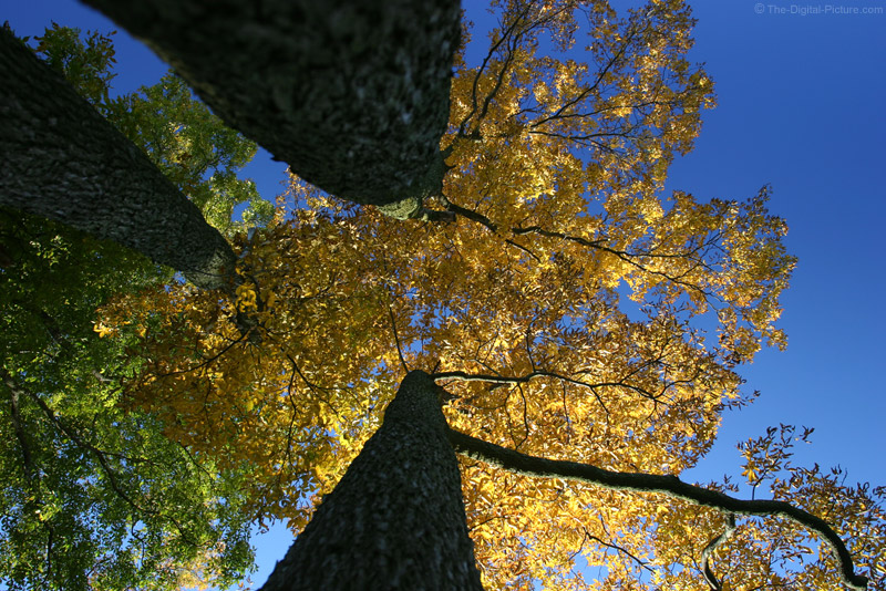 Fall Foliage and Blue Sky
