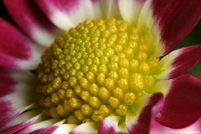 Flower Macro Pictures