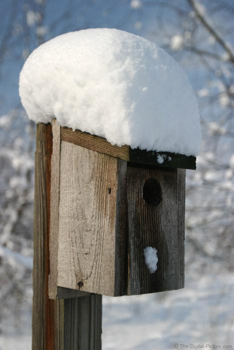 Bluebird Box Picture