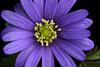 Purple Flower Picture