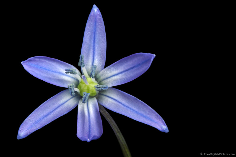 Blue Flower Picture 2