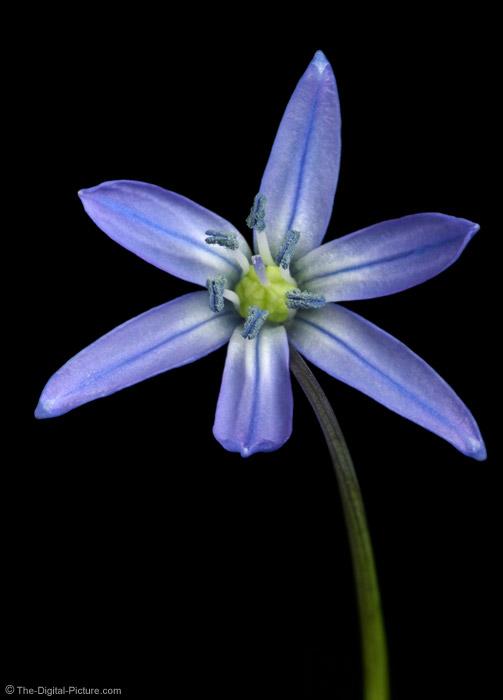 Symmetrical Blue Flower Picture
