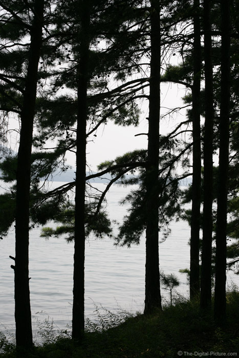 Pine Tree Silhouette Picture