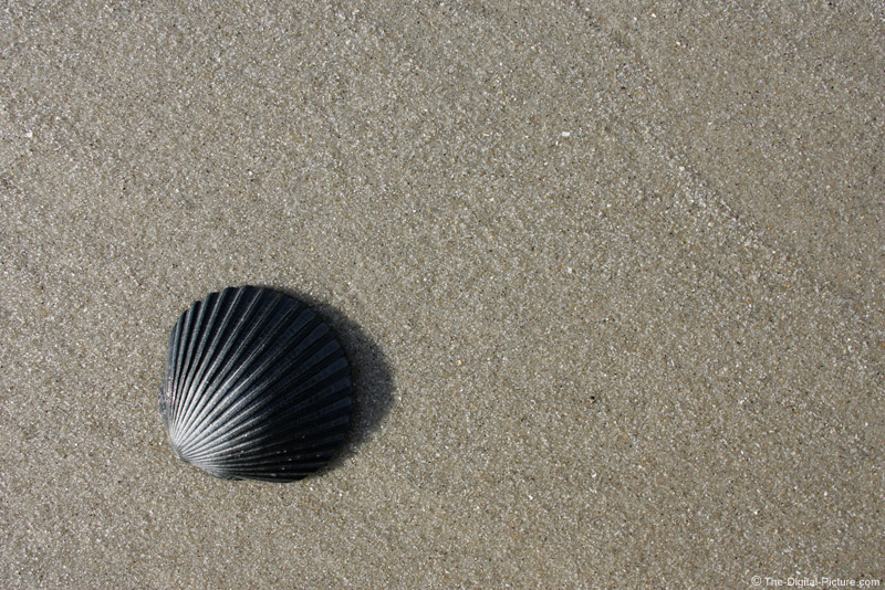 Sea Shell Picture
