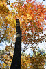 Fall Tree Picture