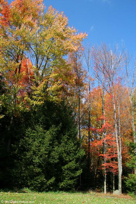 A Fall Scene Picture