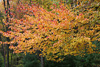 Beautiful Fall Tree Picture