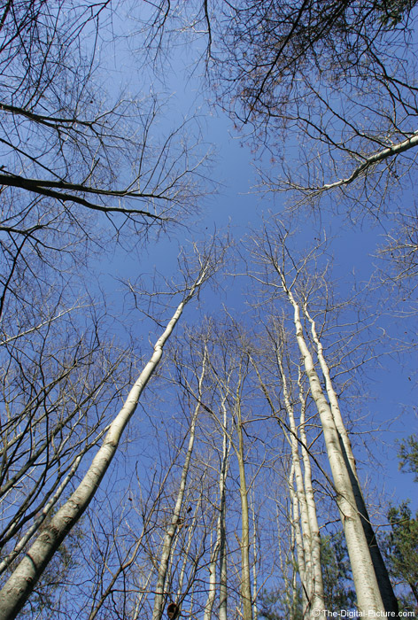 Vertical Perspective Tree Picture