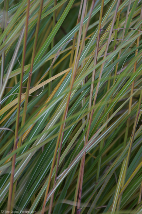 Tall Grasses Picture