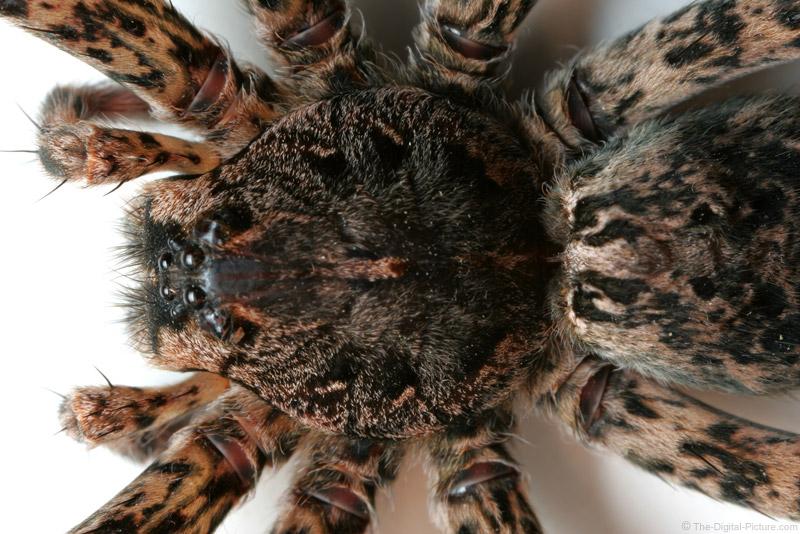 Spider Closeup Picture