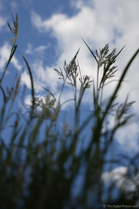 Pompas Grass Defocused Picture