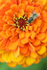 Insect on Flower Picture