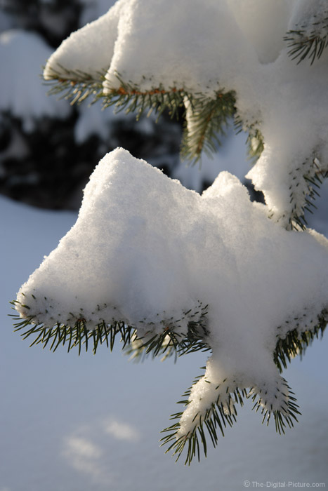 Snow on a Spruce Tree - 75mm