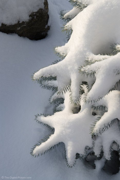 Snow on Tree and Rock Picture