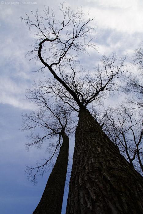 Tall Trees 2