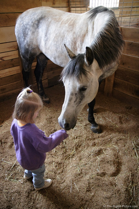 Little Girl and a Horse Picture