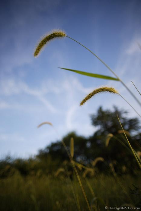 Grasses Picture