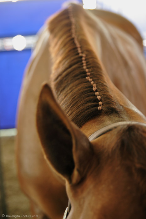 Show Horse Mane Picture