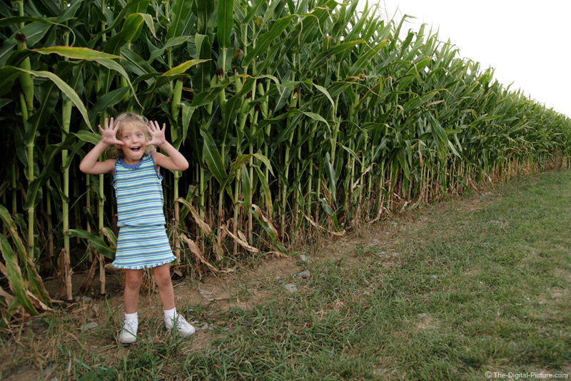 Little Girl by a Corn Field Picture