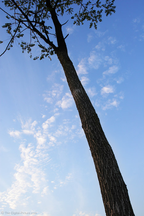 Tall Tree Picture