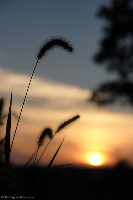 Sunset Behind Grass Picture