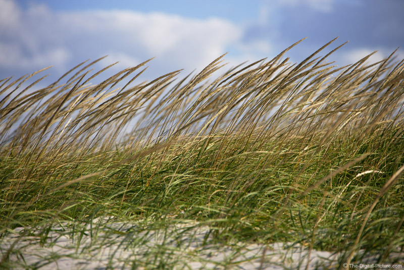 Beach Grass Picture