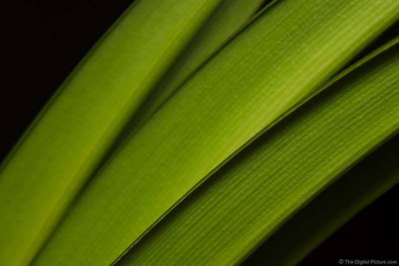 Amaryllis Leaves Picture