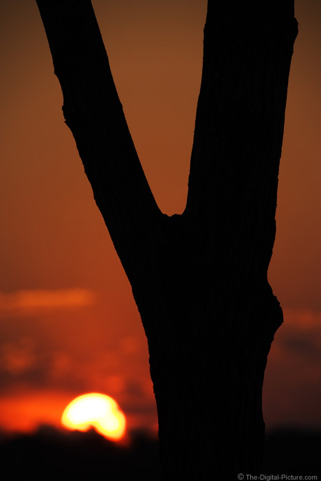 Sunset Behind Tree Trunk Picture