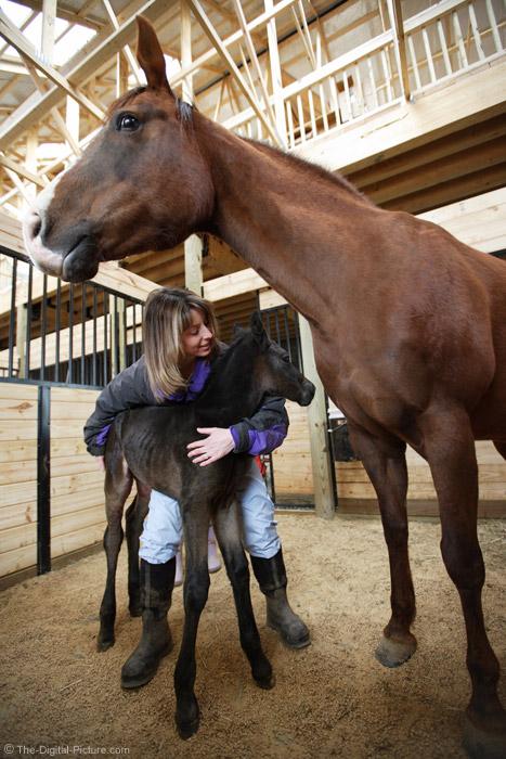 Newborn Foal Picture